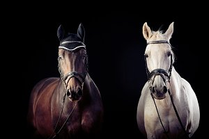 Horses On Black Background
