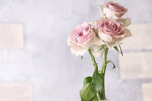 delicate pink roses in vintage, shabby chic