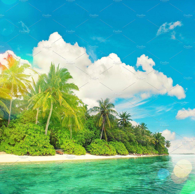 Tropical Island: Tropical Island Beach Landscape