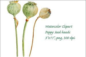 Watercolor Clipart Poppy Seed Pods