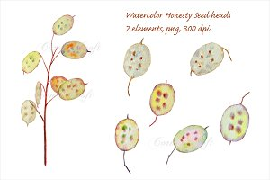 Watercolor Seed Pod Honesty