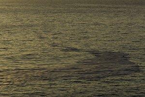 Oil on the sea.