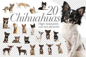 20 Chihuahuas - Cut-out Pictures
