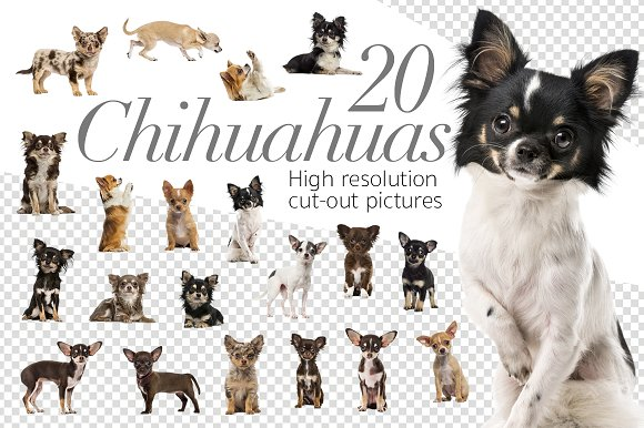 20 Chihuahuas - Cut-out Pic-Graphicriver中文最全的素材分享平台
