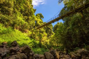 Footbridge in the Rainforest of Dorrigo National Park, Australia