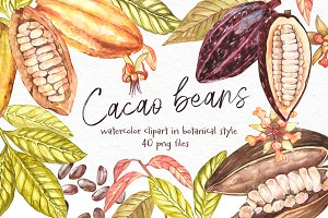 Cacoa beans illustrations