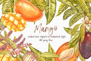 Mango clipart in botanical style