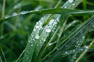 Macro of brilliant raindrops on grass.