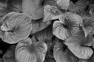 Prehistoric plant life