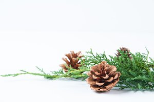 Pinecones & Greenery