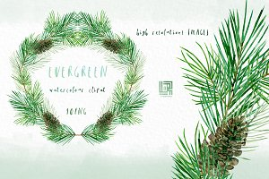 Pine. Watercolor clipart