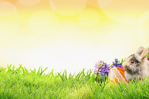 Easter with bunny, eggs and flowers