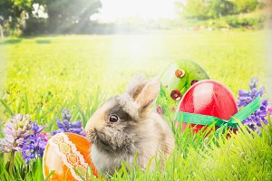 Easter with bunny and eggs in garden