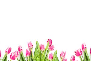 Banner of pink tulips on white