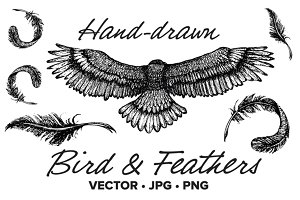 Hand drawn bird & wings vector
