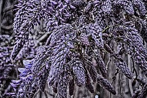 Beautiful Purple Flora