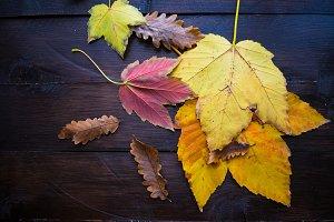 Autumnal tea concept