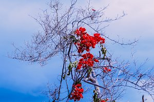 Tropical flowers and blue sky.
