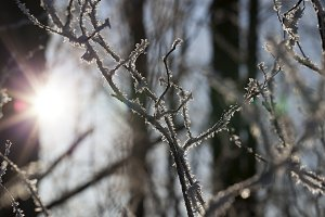Hoarfrost on the branches of a tree