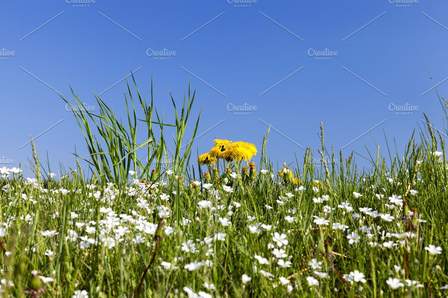 Wild Flowers In May Nature Photos Creative Market