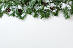 Snowy Fir Branches on White