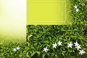 flower on green leaf background