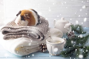 New year's eve hamster with tea and Christmas tree