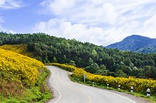 Curve road on a mountain