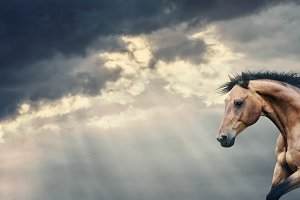Horse running at sky background