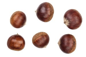 chestnut isolated on white background. Top view
