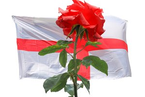 Red rose over English Flag of England