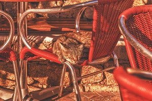 Cats in a cafe