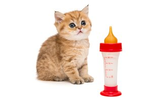 Little red kitten and bottle
