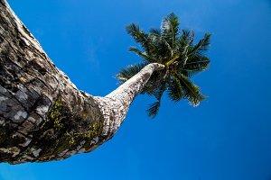 Beautiful big palm tree at the ocean