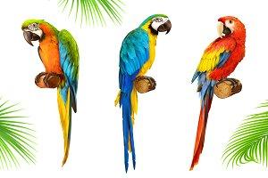 Ara parrot. Macaw. Vector