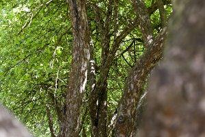 trees row