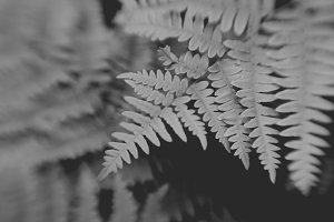 Black and White Botanical II