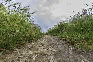 Path in La Coruna, Spain.