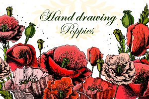 Beautiful Hand drawing poppies