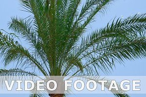 Palm trees leaves and branches flying on the wind