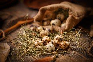 Fresh quail eggs