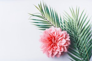 Pastel flower and tropical leaves