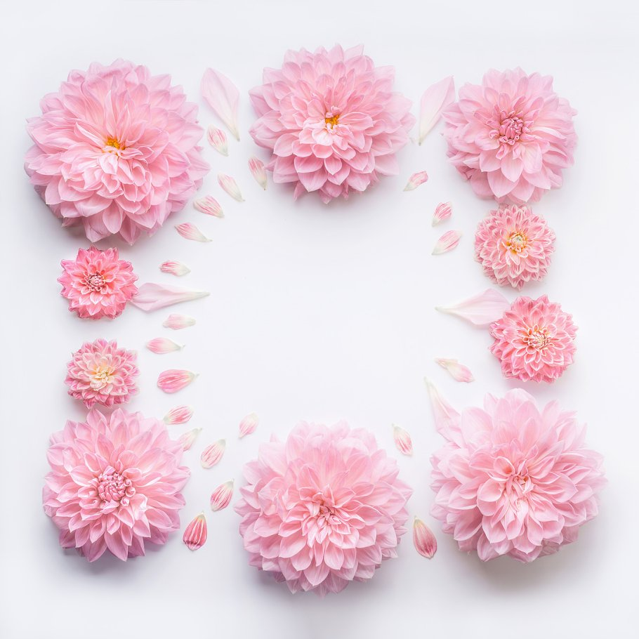 Frame of pink pale flowers , layout ~ Arts & Entertainment Photos ...