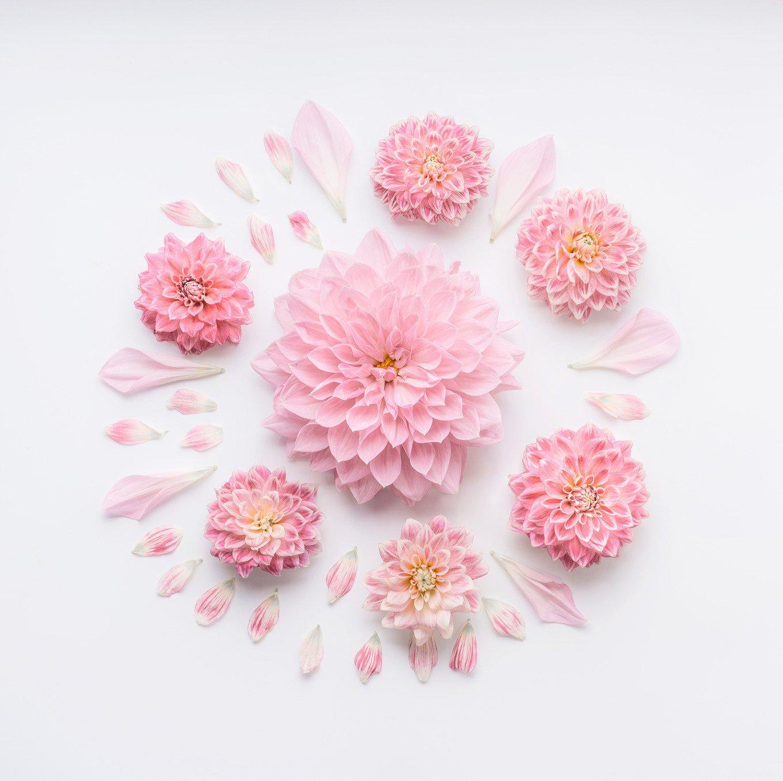 Round Pink Pale Flowers Composition Arts Entertainment Photos Creative Market