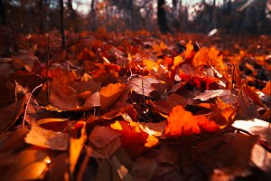 Autumn leaves close up on sun background