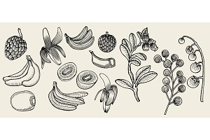 Fruit drawn in ink on a beige background