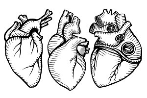 A set of human hearts.
