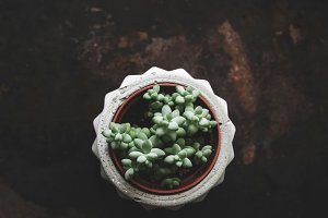 Succulent plant in concrete plantpot over dark backdrop