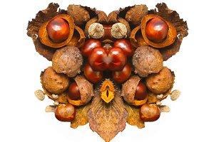 Isolated autumn chestnuts