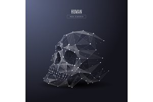 human skull low poly white
